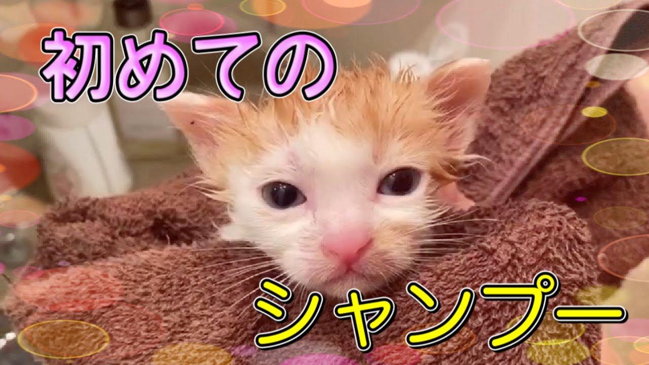 保護した子猫ちゃんをシャンプーしました!【Kitten shampoo】