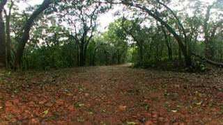 Forest VR 360 Degree Video ....Swipe the video screen...a Peaceful place!