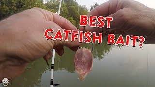 How To Catch Catfish From The Bank | Catfishing Bait, Rigs, & Tips!