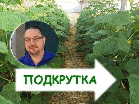 Технология выращивания огурцов. Как вырастить огурцы в теплице?