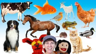What Do You See? Song   Animals and Sounds   Learn English Kids