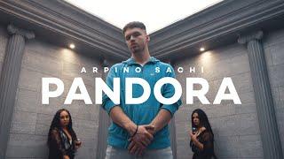 ARPINO SACHI - Pandora