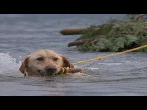 军犬挽救无数人的生命,退役后竟要被执行安乐死?