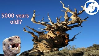 15 Oldest Living Things on Earth