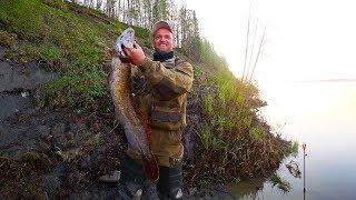 Рыбалка на огромного налим