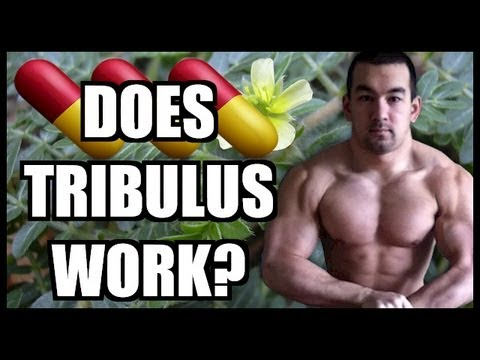 Tribulus Review - Does Tribulus Work?