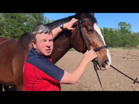 Equine Massage -Myofascial Therapy for Horses (TMJ Trigger ...