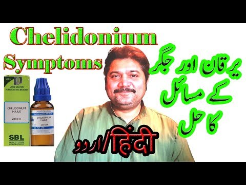 Chelidonium Symptoms in Hindi/Urdu