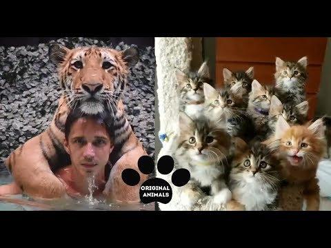 Original Animals #5. CUTE AND FUNNY ANIMALS VIDEO/ МИЛЫЕ И СМЕШНЫЕ ЖИВОТНЫЕ.