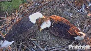 SW FL Eagles - It's eaglet time!! Welcome E9 - 12-31-16