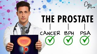 WHAT IS THE PROSTATE? | BPH + Cancer + PSA + More! | Doctor Mike - Video Youtube