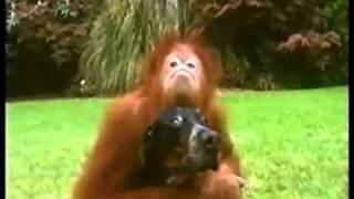 Bestest Buddies: Orangutan and Hound Dog (must see!)