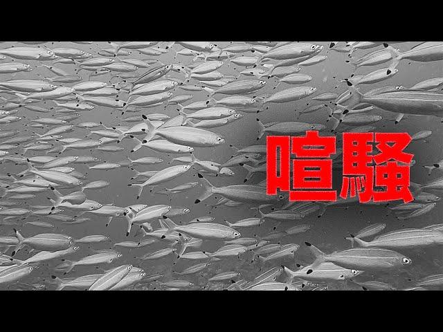 なんだか最近、石垣島の海の中が騒がしい…|ビーチライフ石垣島ダイビングチャンネル