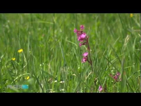 Frühling am Plateau
