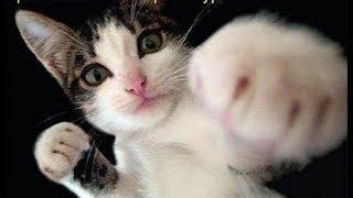 Кошачий БОКС ! Смешно До Слез! Feline BOXING! Ridiculous Until Tears!
