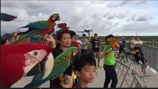 Macaw parrots Lovers outdoor free flight