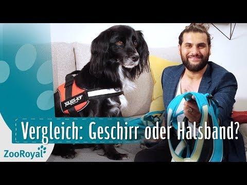 Vergleich: Geschirr & Halsbandtypen | Rund um den Hund mit Masih Samin | ZooRoyal