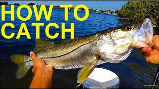 How to Catch Fish Around Mangroves Snook Redfish Snapper Trout Florida
