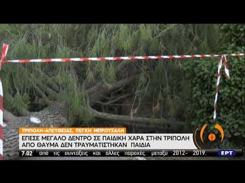 Έπεσε μεγάλο δέντρο σε παιδική χαρά στην Τρίπολη | 03/07/2020 | ΕΡΤ