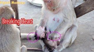 Breaking Heart Why Mama Amara Warning Tiny Baby Amy Like That ? So Pity Tiny Baby Amy / PTM 1268