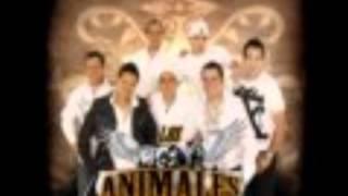 admirador secreto: grupo los animales