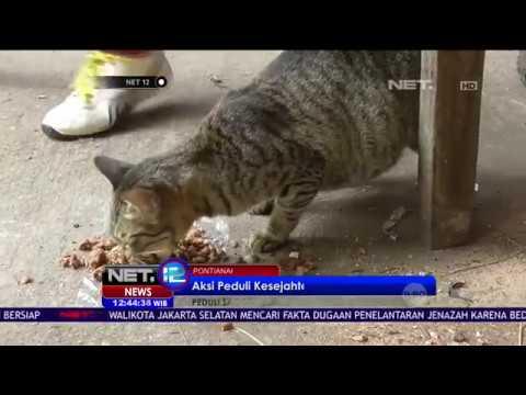 Video Komunitas ini Makanan Gratis bagi Kucing liar di Pontianak - NET12