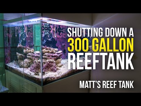 SHUTTING DOWN a 300 GALLON REEF TANK | Matt's Reef Tank