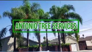 antonio-tree services
