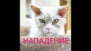 ЖЕСТОКОЕ НАПАДЕНИЕ КОТА! Смешная подборка с котиками (Funny cats)