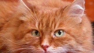 Ты мой миленький,хорошенький,мой котик!