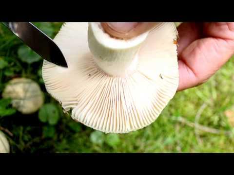 Che il più efficace per guarire un fungo di unghie su una gamba