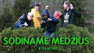SODINAM 100 MEDŽIŲ! | Lauritta, STIMOMEDIA, Talžūnas, Vėjas | Pildyk ofisas #teamtrees