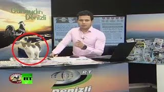 Stray kitten crashes live news broadcast in Turkey, finds warm laptop to sit on
