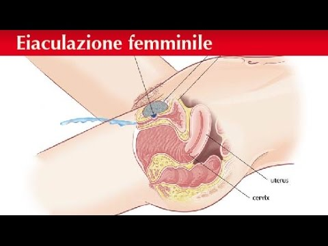 Video di sesso con fighe pelose