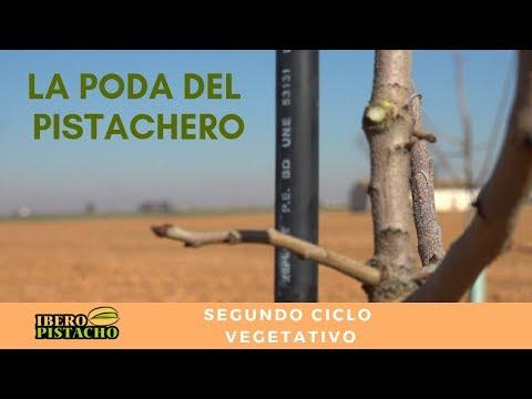 Fotograma del vídeo: Poda del pistachero. Año 2