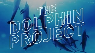 Swimming With Wild Dolphins in 360° Virtual Reality — The Dolphin Project