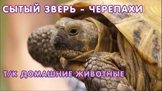 Сухопутные и водные черепахи - содержание, кормление, ошибки