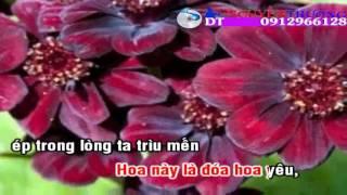 Karaoke  Loài Hoa Không Vỡ   Tâm Đoan