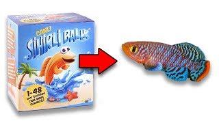 SİHİRLİ BALIK - Suya Koyunca Canlanan Balığı İnceledik