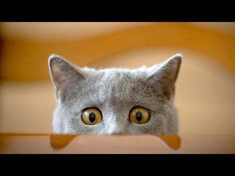 Funny Cats ECards Funny cats Funny Cat Videos Funny Animals Try Not..