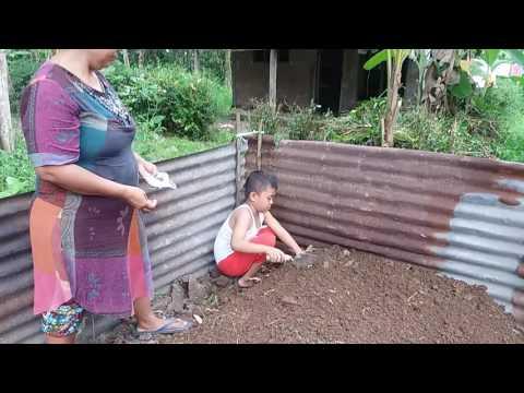 Video Warung Hidup Belajar Menanam Oyong Bagi Anak pada Media Tanam Bedengan