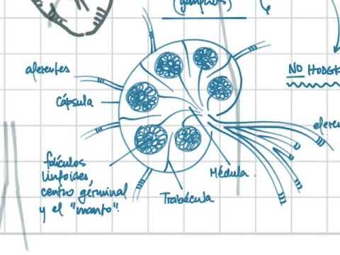 Cancer de amigdale simptome