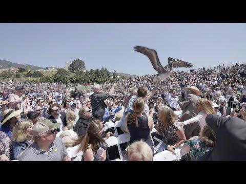 Crazy Kamikaze Pelicans Bombard Attendees at Graduation Ceremony