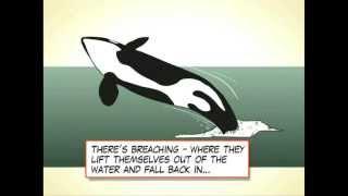 Killer Whale 101