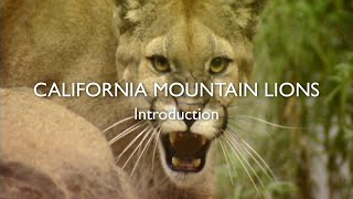 California Mountain Lions, Episode 1: Introduction