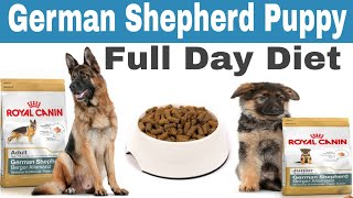 German Shepherd Puppy Full Day Diet Plan || German Shepherd dog full day diet plan