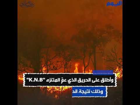 العالم يحبس أنفاسه .. النيران تقترب من أكبر شجرة في العالم