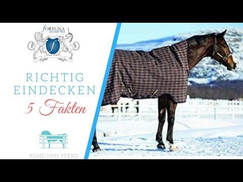 5 Fakten über das eindecken vom Pferd! Braucht mein Pferd eine Decke?