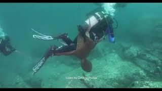 DEITA.RU Осьминог напал на дайвера в Японском море