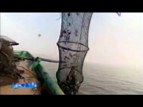 Come a pesca per prendere 100esimo crucian